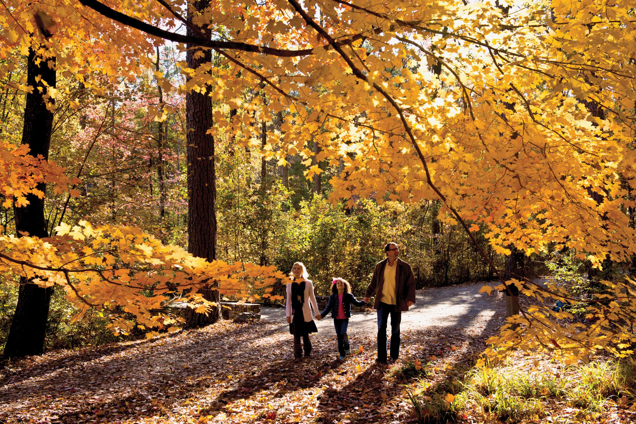Garvan Woodland Gardens is brilliant in the fall… and so close to ...