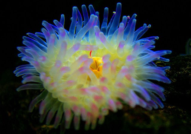 Anemone London Aquarium Ocean Creatures Sea Animals Sea Creatures