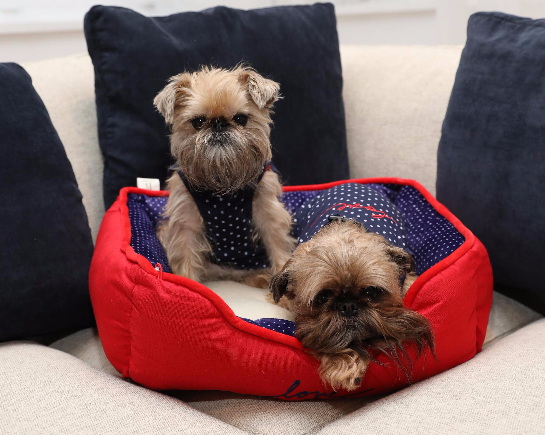 We call it a Love Cuddler Dog Bed for a reason. Your dogs