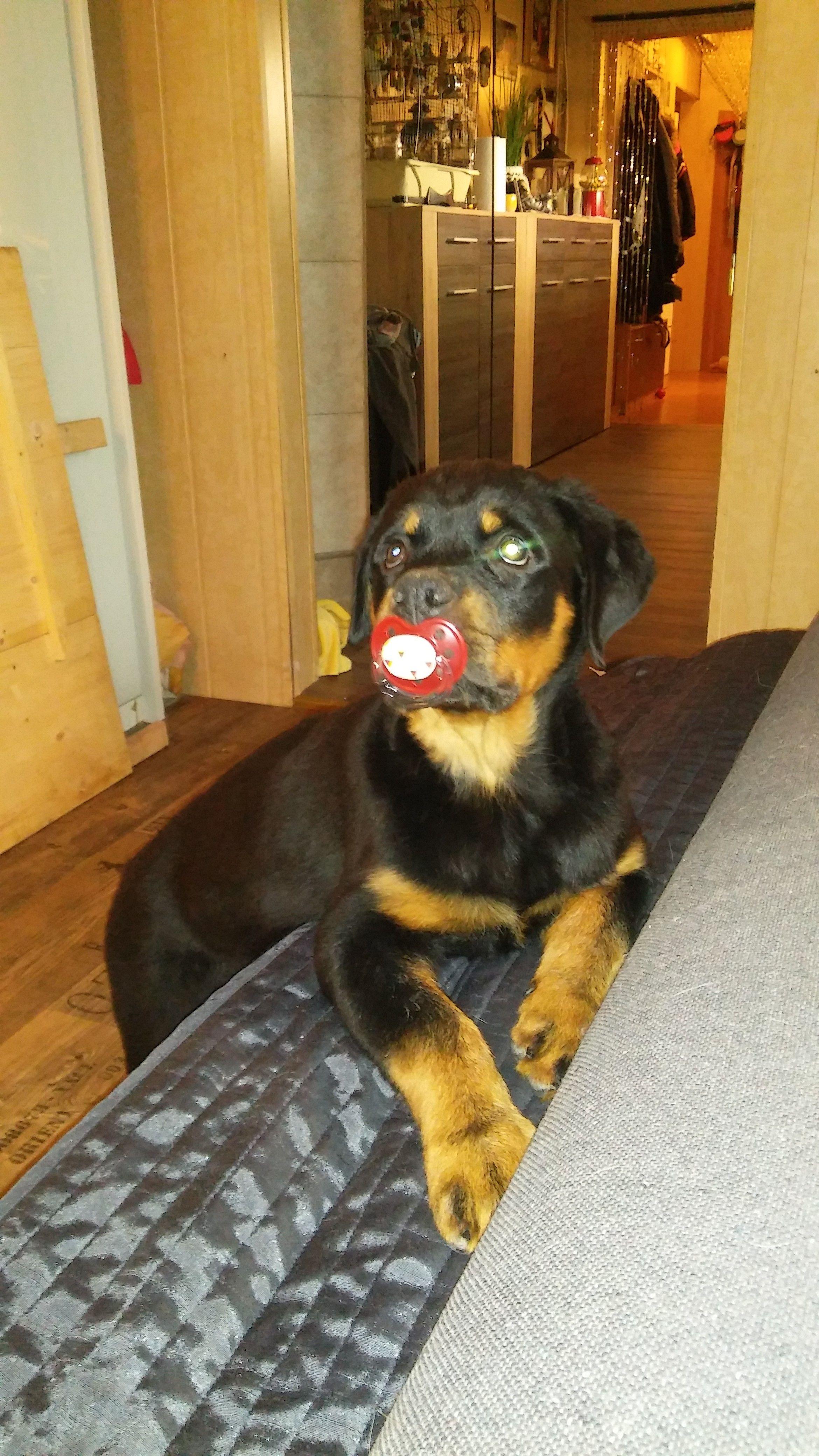 Hunde Foto: Wolfgang und Laika - Ich bin ein Nuckel