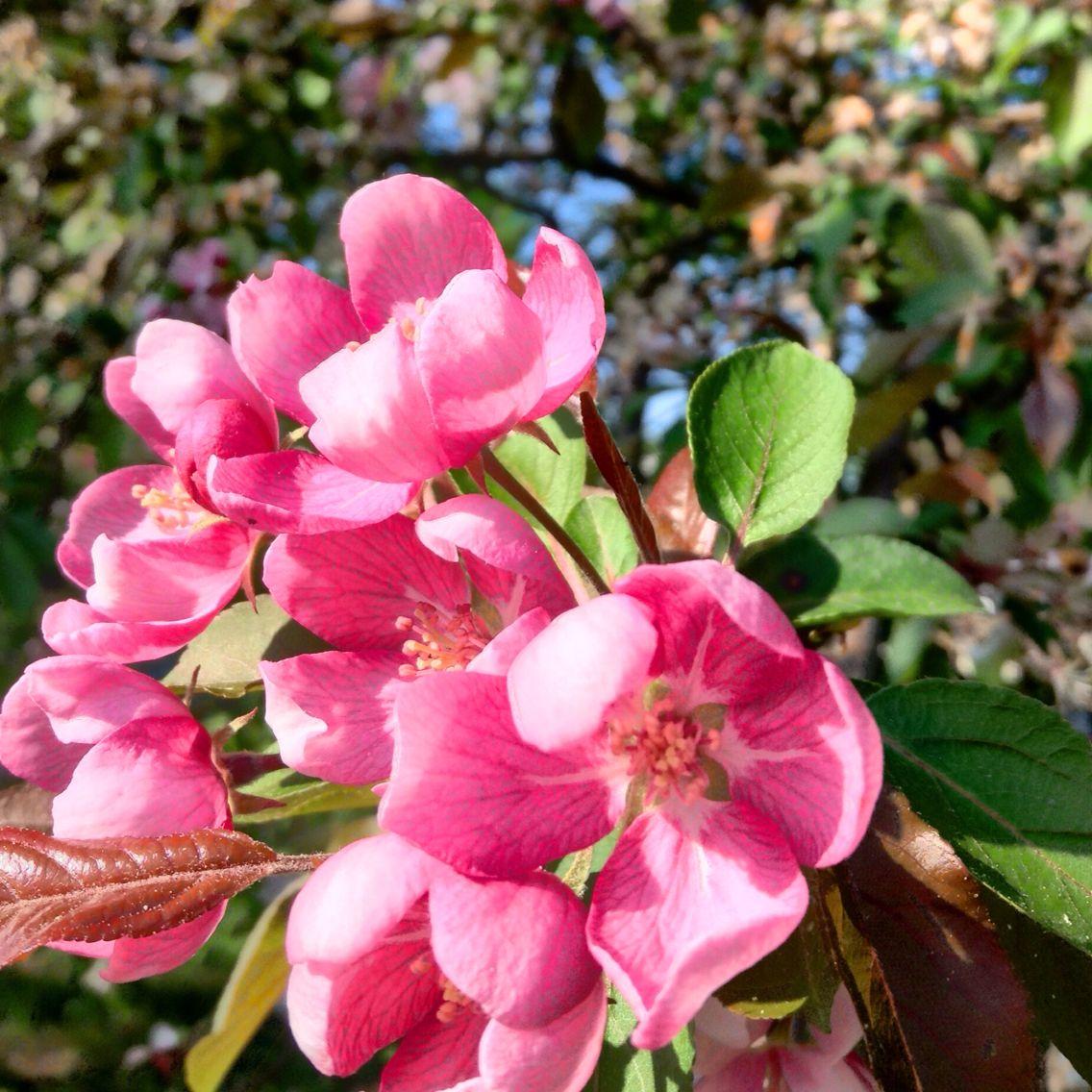 Flowers on the farm Flowers, Plants, Farm