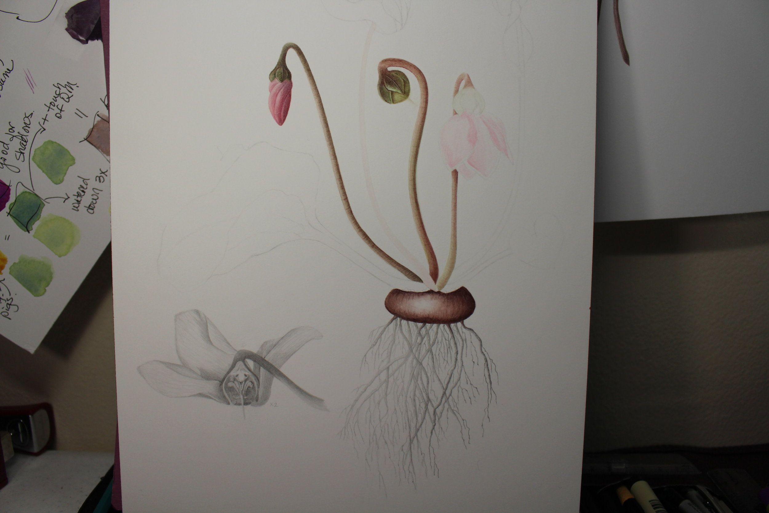 Check It Out At Constancereeder Com Botanical Illustration