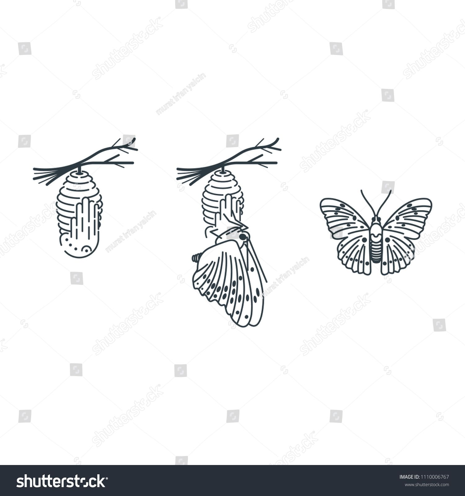 Cocoon And Butterfly Vector Drawing Butterfly Drawing
