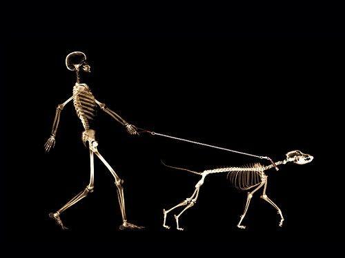 still walking...