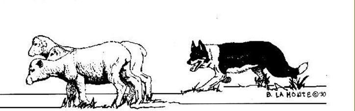 Northern California Working Sheepdog Association Inc Sheepdog