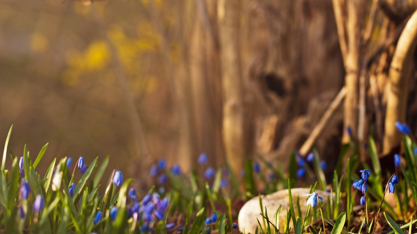 1366x768 Wallpaper Flowers Grass Leaves Stones