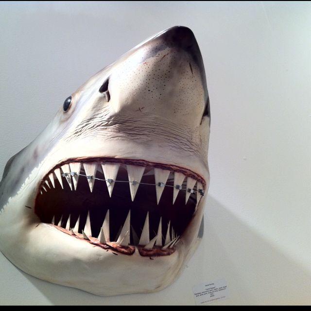 Shark With Braces Animal Smiles Dental Humor Braces