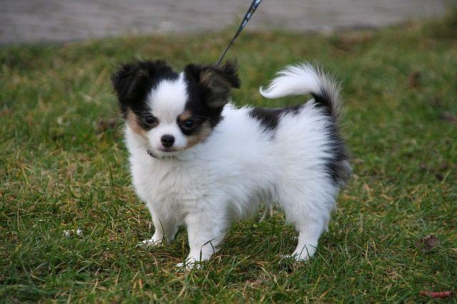 Kostenloses Bild auf Pixabay Tiere, Hunde, Welpen