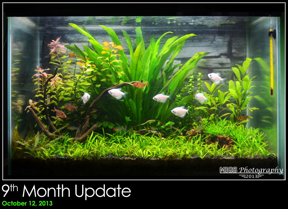 Technology Management Image: Migs' 20 Gallon Low-Medium Tech Planted Tank Monthly