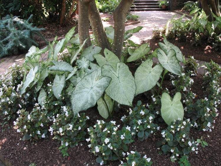 Plantes d\'ombre pour le jardin en 25 photos fascinantes! | Garden ...