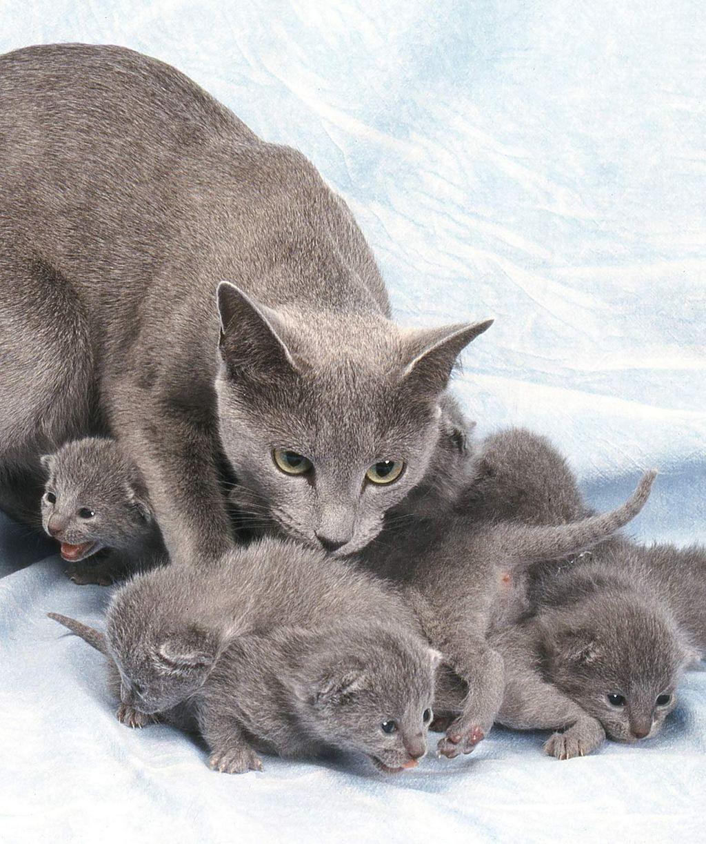 Cat products at Banggood USA. cats kittens kitten Meow