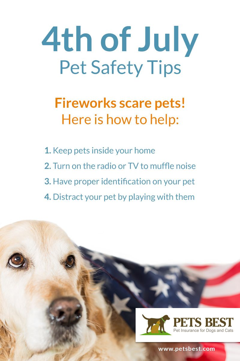 4th Of July Pet Safety Tips Pet Safety Best Pet Insurance Pet