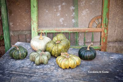 Gershwin & Gertie's Small Pumpkin Collection: Assorted set of 6: