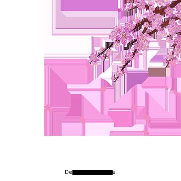 벡터 벚꽃 벡터 벚꽃 꽃무료 다운로드를위한 Png 및 Psd 파일 Japanese Cherry Blossom Cherry Blossom Flowers Cherry Blossom