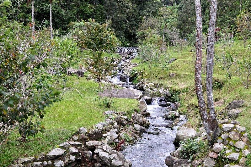 Cibodas Botanical Garden Indonesia