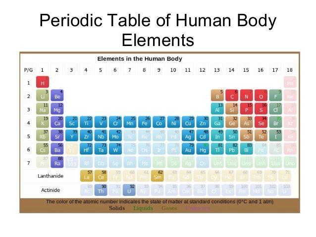periodic table elements in human body this periodic table shows what are the elements available in human body this periodical chart taken from - Periodic Table Of Elements For 5th Grade