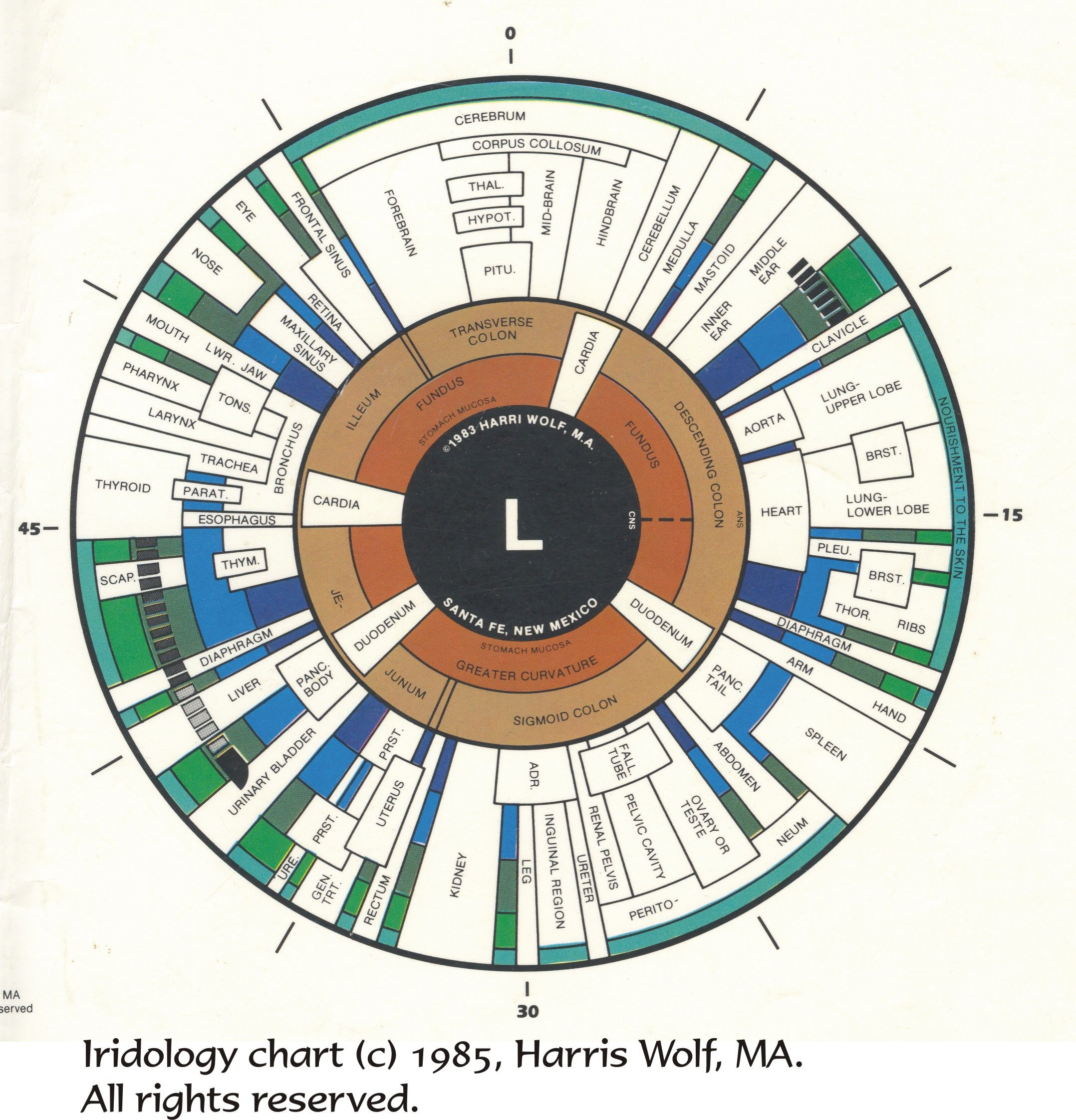Iridology chart for the iris of the left eye defines the many iridology chart for the iris of the left eye defines the many iridology zone details charted to show how iridology relates to tissues organs of t geenschuldenfo Gallery