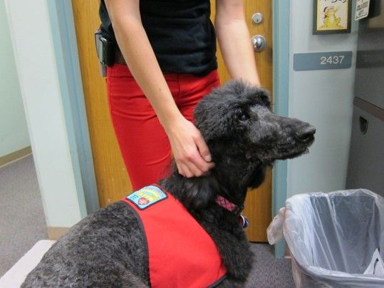 At Children S Hospital Therapy Dogs Help Children Find Their Voice Therapy Dogs Dog Help Dogs