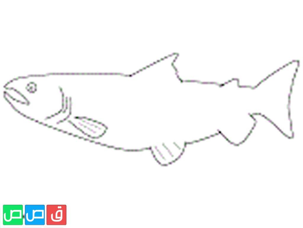 صور سمك للتلوين Chart Diagram Art