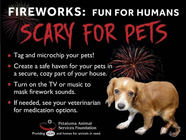7 Reasons To Rant About Fireworks Via Treehugger 3 July 2017 Highlights Some Of The Many Harms That Fireworks C Dogs And Fireworks Fireworks Vet Tech Humor