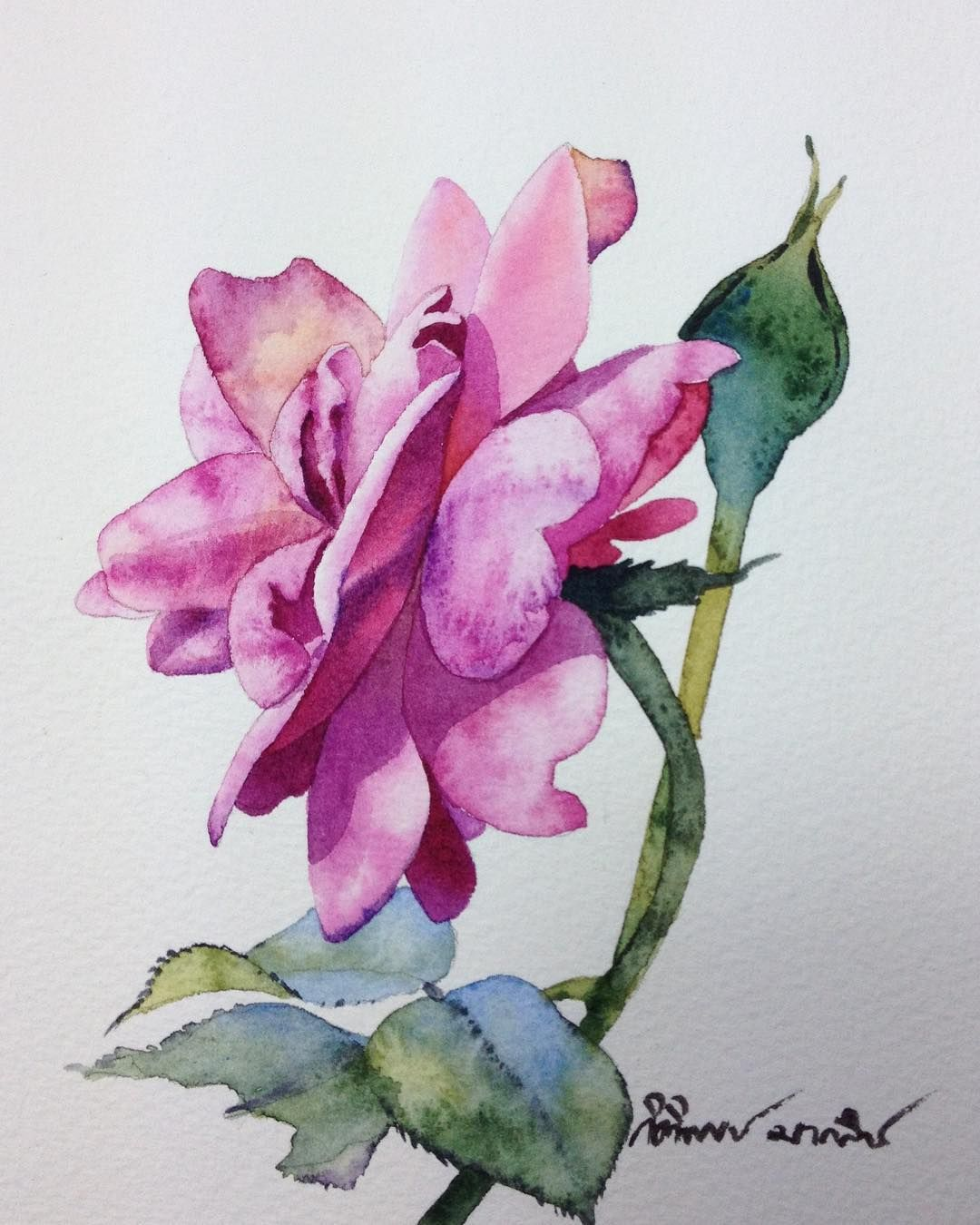 The Rose Painting Flowers Roses Aquarelle Aquarius Art