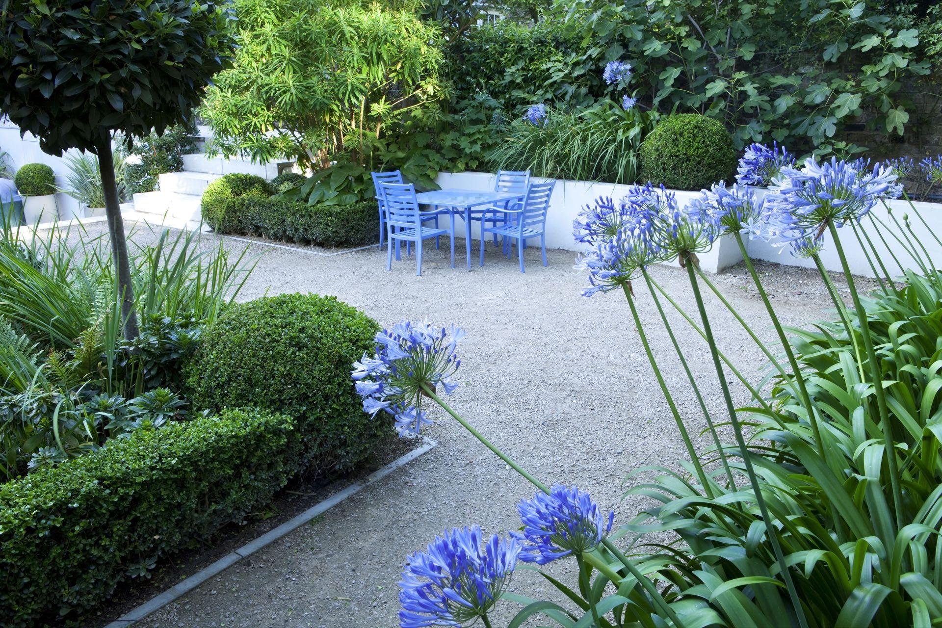 Declan Buckley Design Associates Highbury Place Garden North London Plants Family Garden Agapanthus Plant