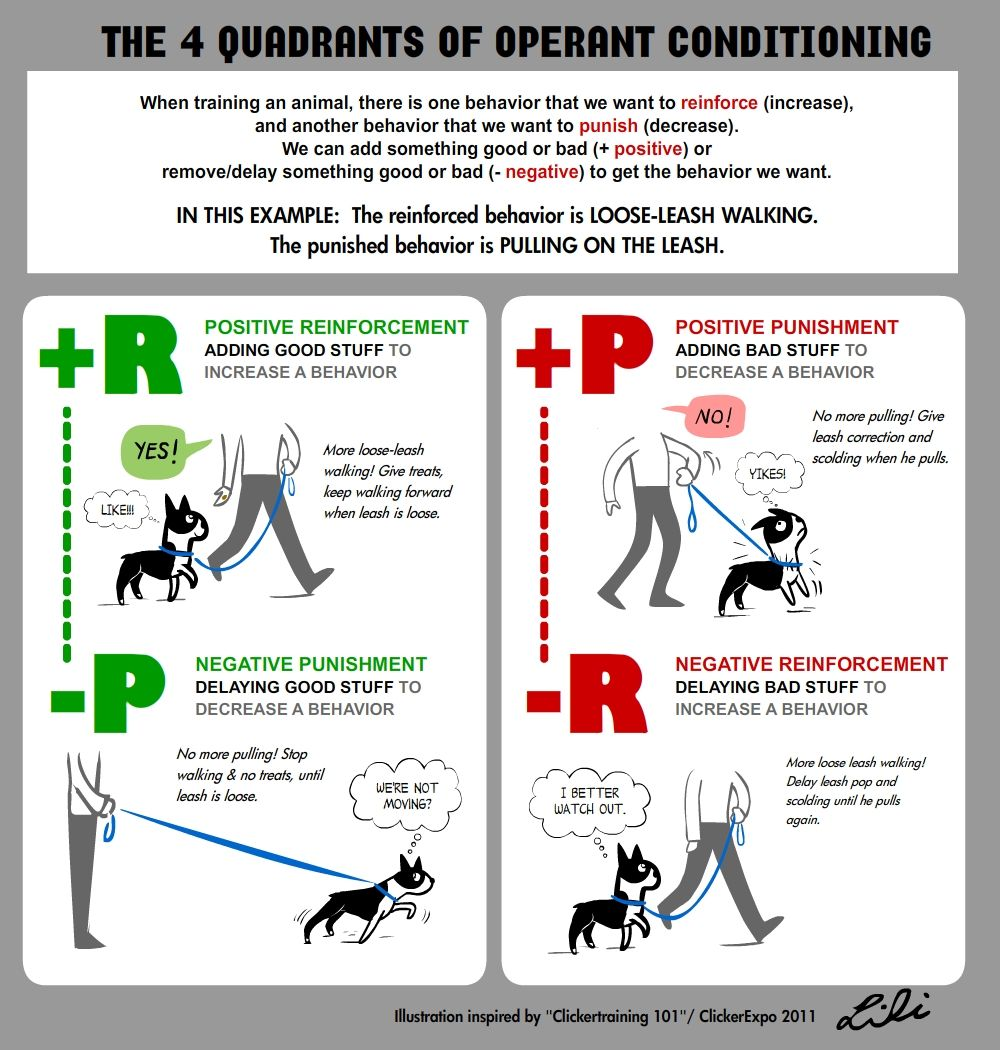 Classical Conditioning Examples If You Have Any Questions Dont