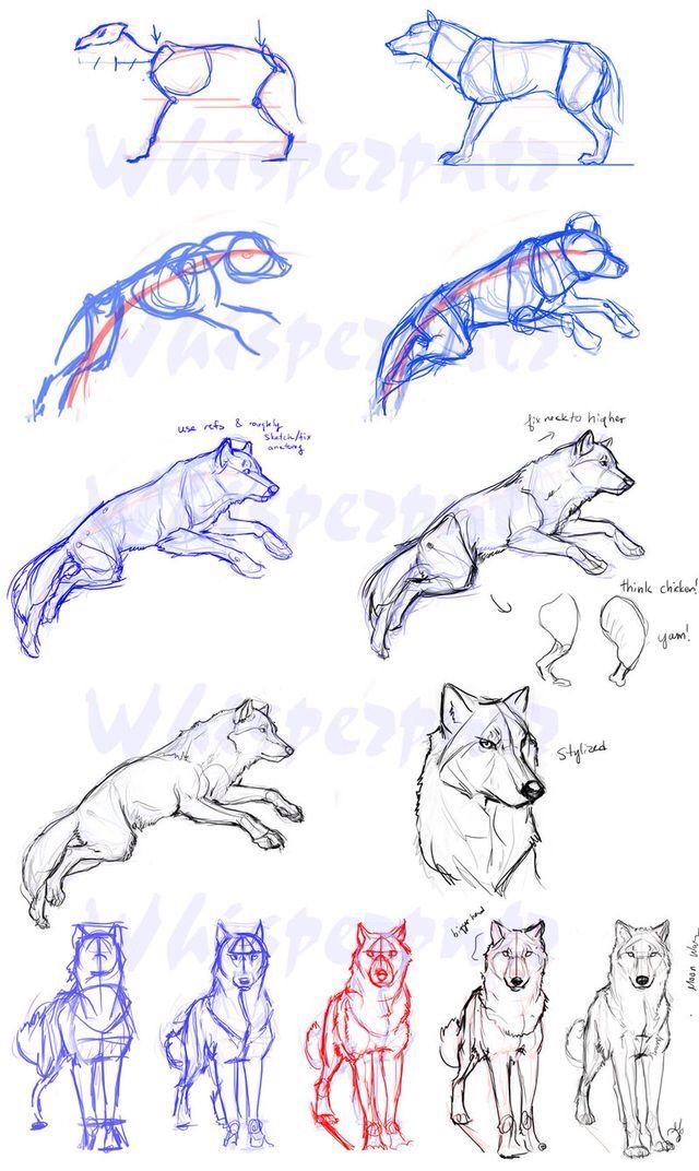 Loup Comment Dessiner Un Loup Dessin D Animal Dessin De Loup