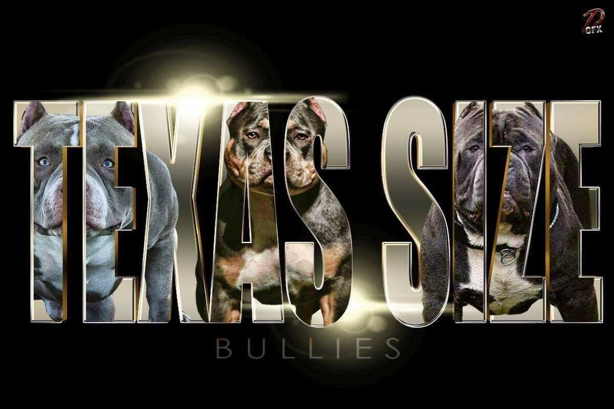 Featured Kennel Texas Size Bullies Bully King Magazine