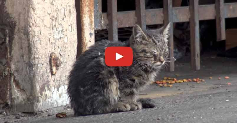 Blind Kitten Sits In Parking Lot And Wonders How She Will Survive