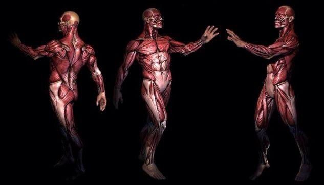 Crean el #Google #Maps del cuerpo humano... Entérate mas aquí: http://goo.gl/8Qxaf4