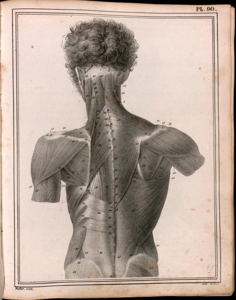 PL. 90. Manuel d'Anatomie Descriptive Du Corps Humain (1825-1836 https://pinterest.com/pin/287386019950178976) by Jules Germain Cloquet (1790-1883 https://pinterest.com/pin/287386019948845673).