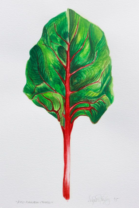 Red Rainbow Chard Leafy Green Watercolor Series Etsy Green Watercolor Rainbow Chard Watercolor