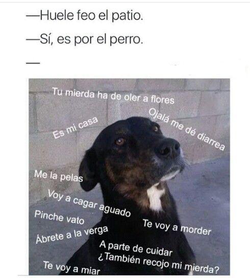 Meme Perro Jajajaja Memes De Animales Divertidos Humor De Perros Memes Perros