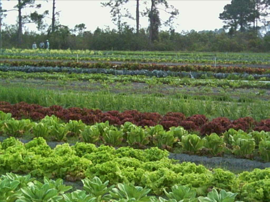 Http Socialmediabar Com Organic Farming The Importance Of