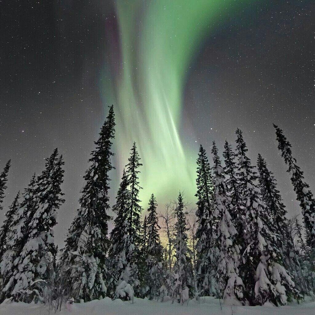 Title Taiga Forest Aurora Photographer James Woodend Northern Lights Forest Natural Landmarks
