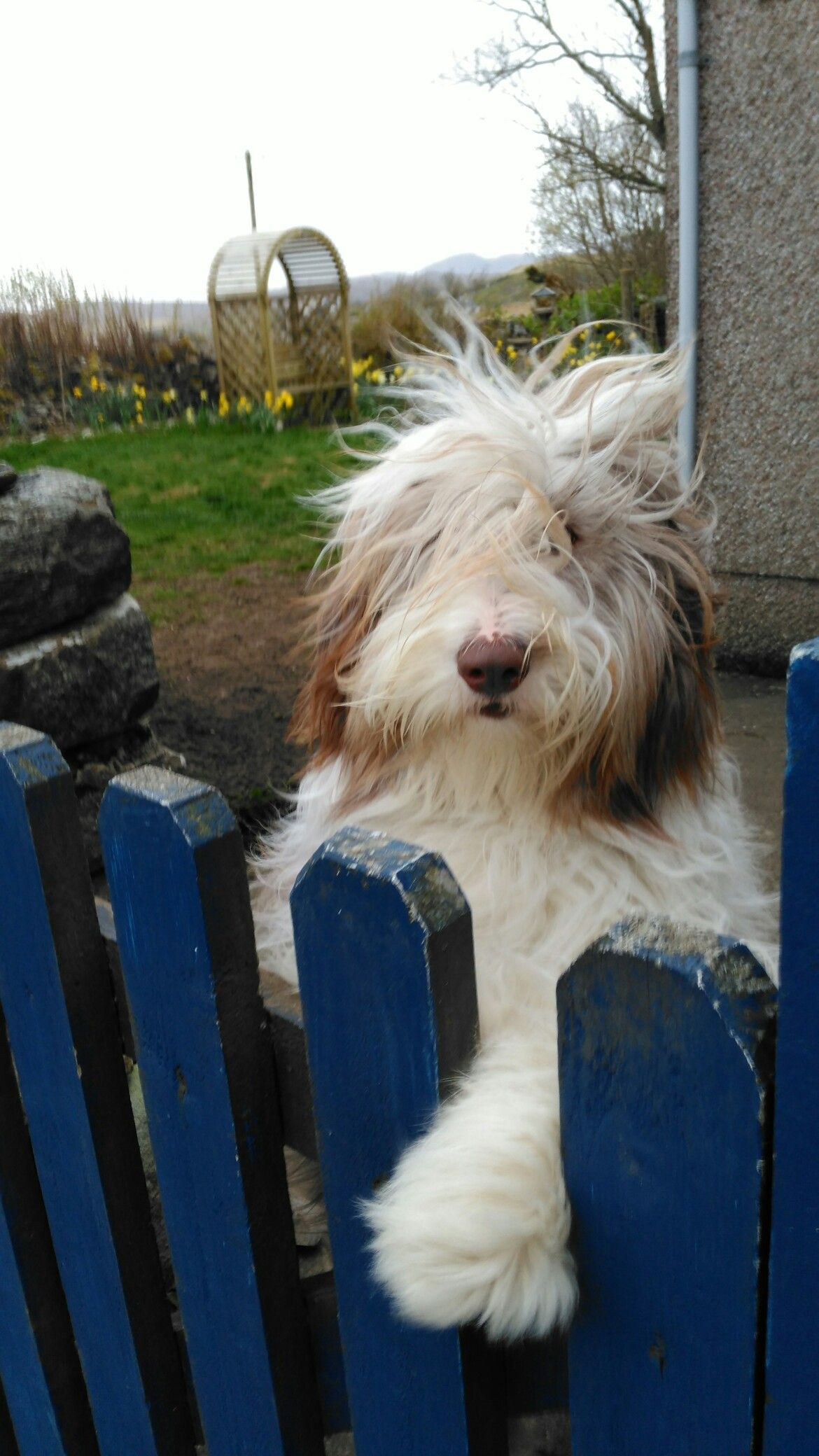 Take Me With You Dog Breed Names Bearded Collie Griffon Dog