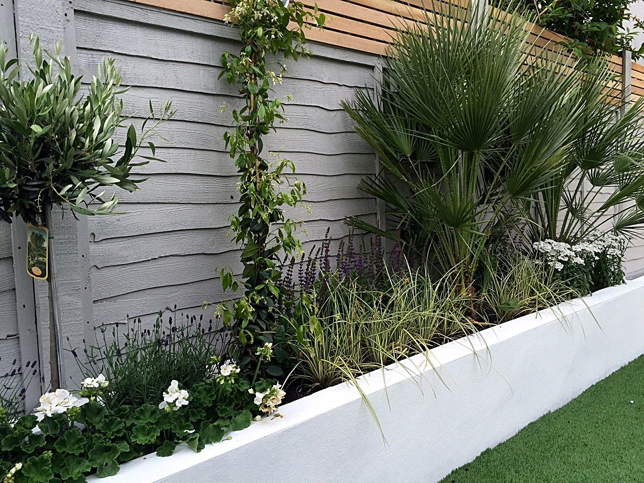 Render walls planting small garden design painted fence for Back garden ideas
