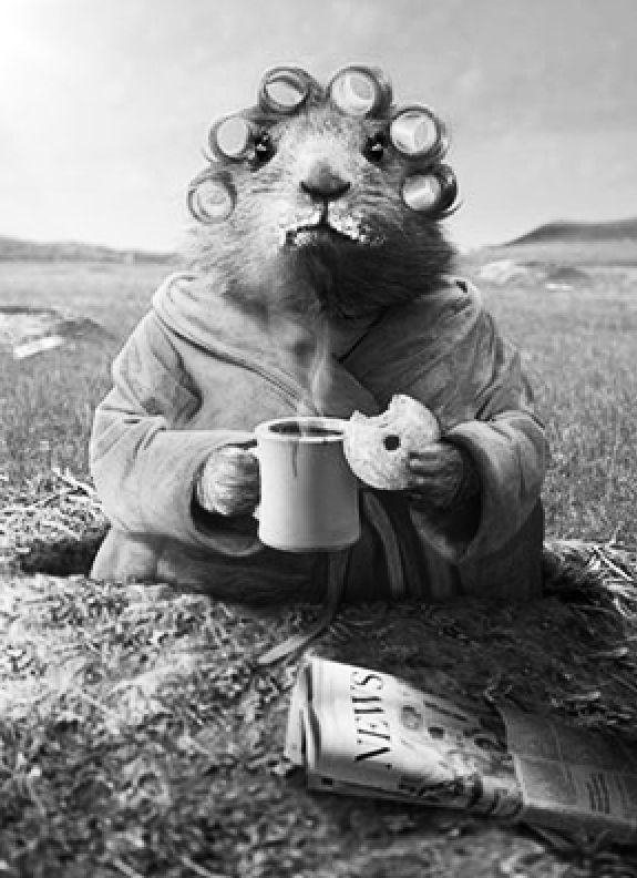 Мишки, прикольные картинки гуд монинг