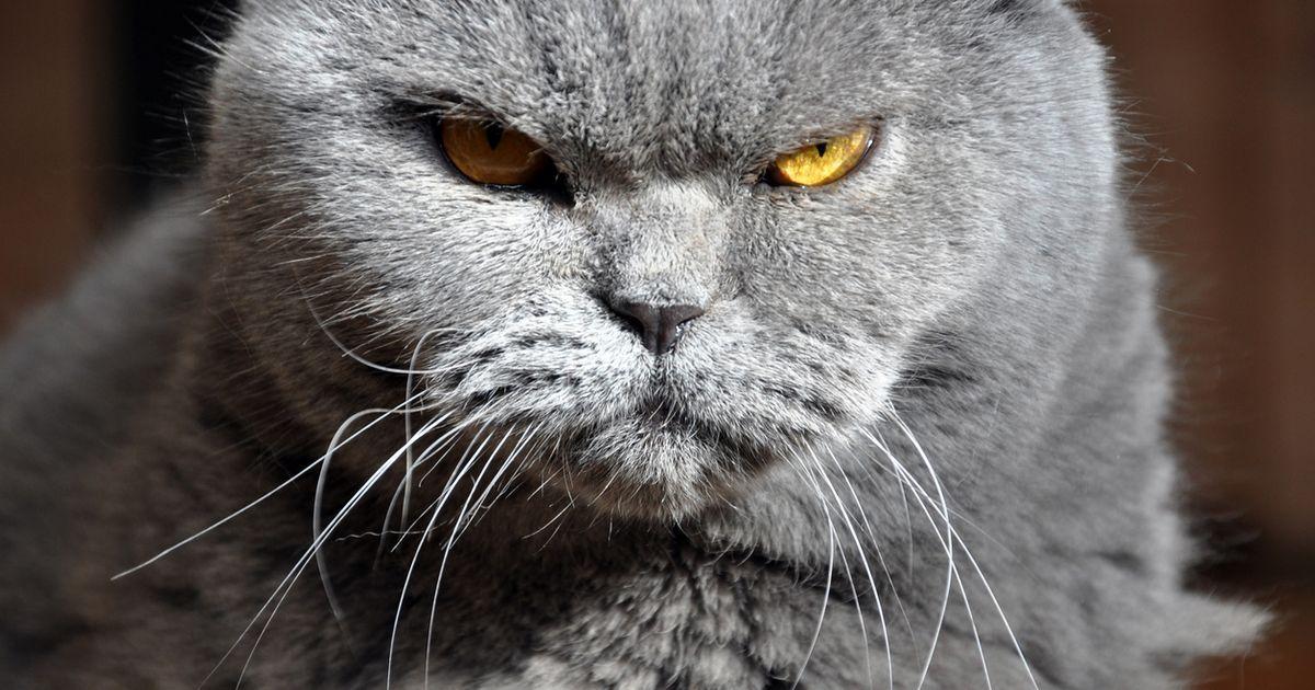 Ungewohnlicher Aufruf Tierheim Bietet Schlimmste Katze Der Welt Zur Adoption An In 2020 Tierheim Katzen Tiere