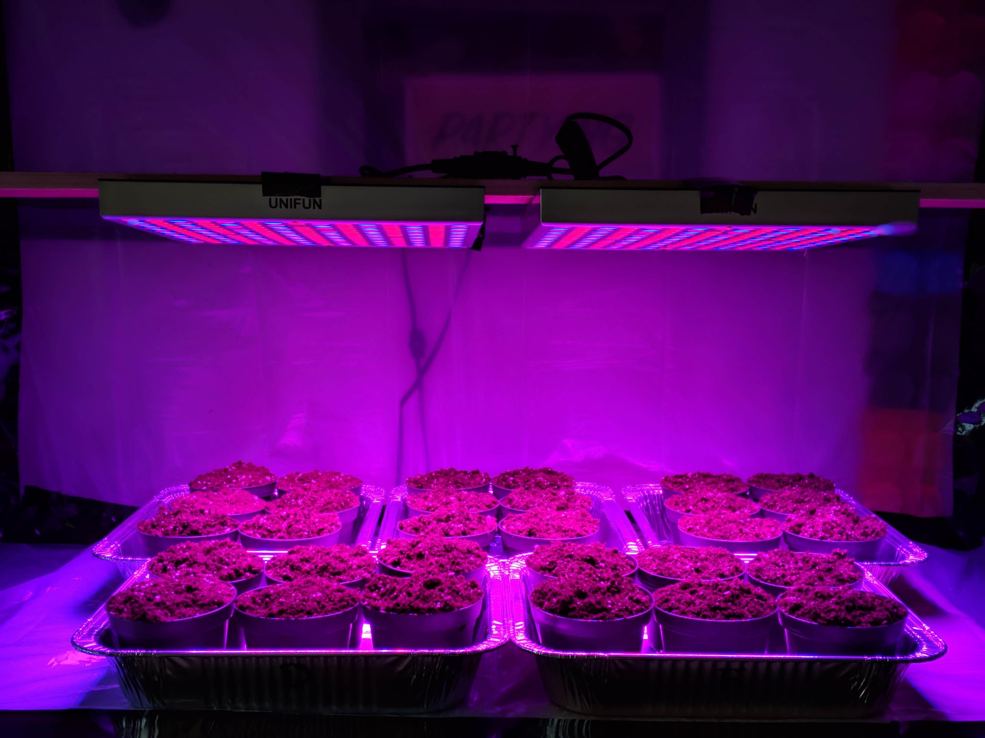 Full Spectrum Led Grow Lights Reviews 1000w Led Grow Light Led Grow Lights Grow Lights Led Grow