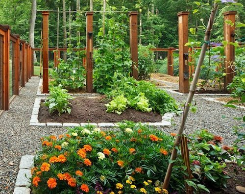 Guest Blogger: How to Design a Beautiful Vegetable Garden, 500x396 in 143.3KB