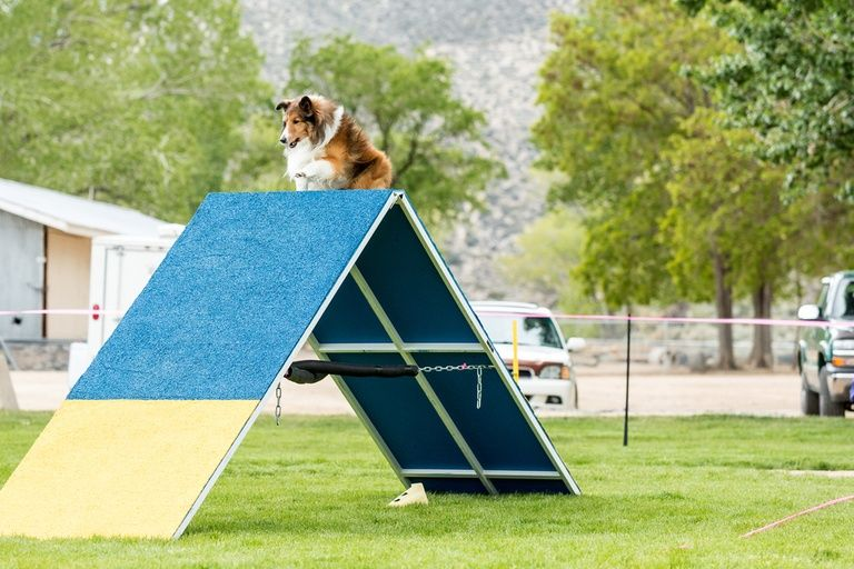 How To Make A Dog Agility Course Out Of Household Items 7 Different Stations Dog Agility Dog Playground Dog Behavior