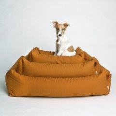Cloud7 Finest Interiors For Dogs & Dog Lovers
