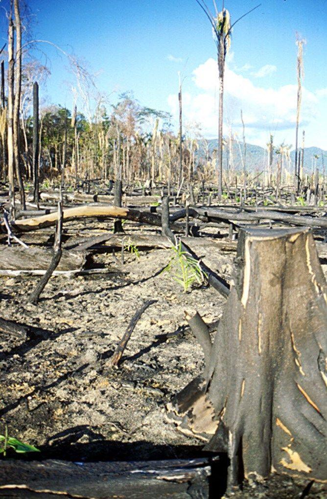 Godzilla El Niño: time to prepare for mega-droughts