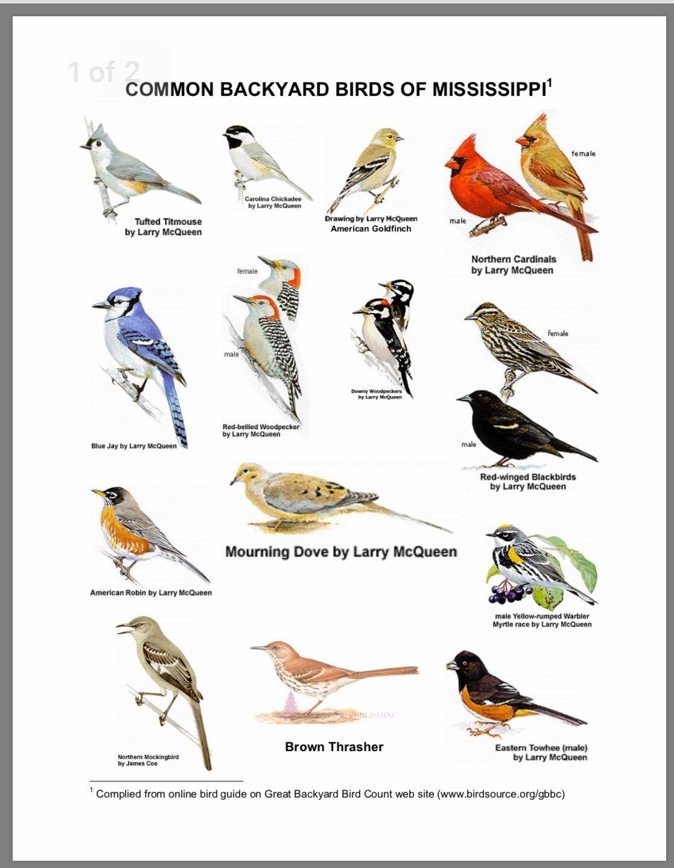 Birds Of Mississippi
