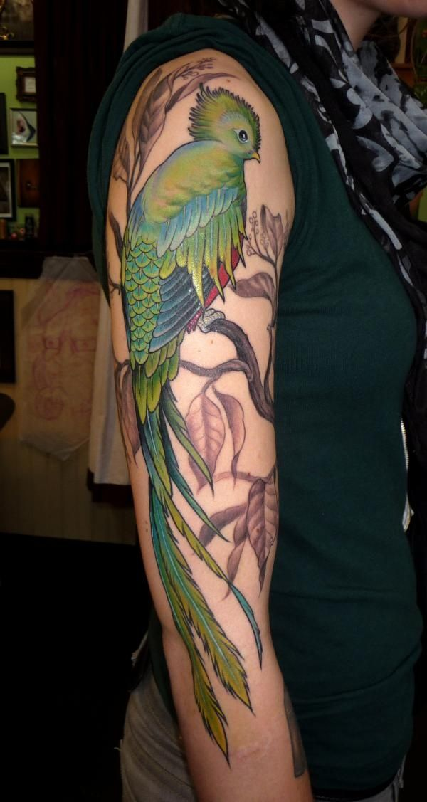1534fa26d8f38 Guatemala state bird of the tattoo that I want to get | TATTOO'S ...