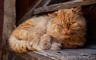 Cheddar Is Dell Duke S Cat At The Beginning Of The Book The Cat