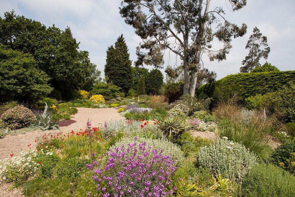 beth chatto garden der kiesgarten ist die trockenste. Black Bedroom Furniture Sets. Home Design Ideas