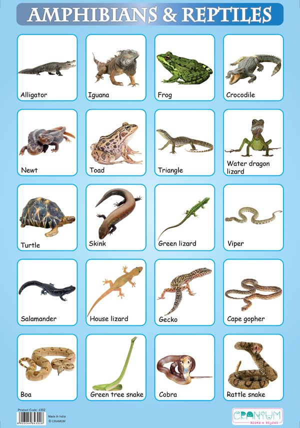 Amphibian | Prehistoric, The o'jays and Amphibians